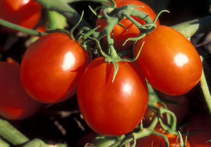 home grown tomatos