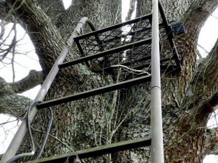 Dear Hunting Tree Ladder